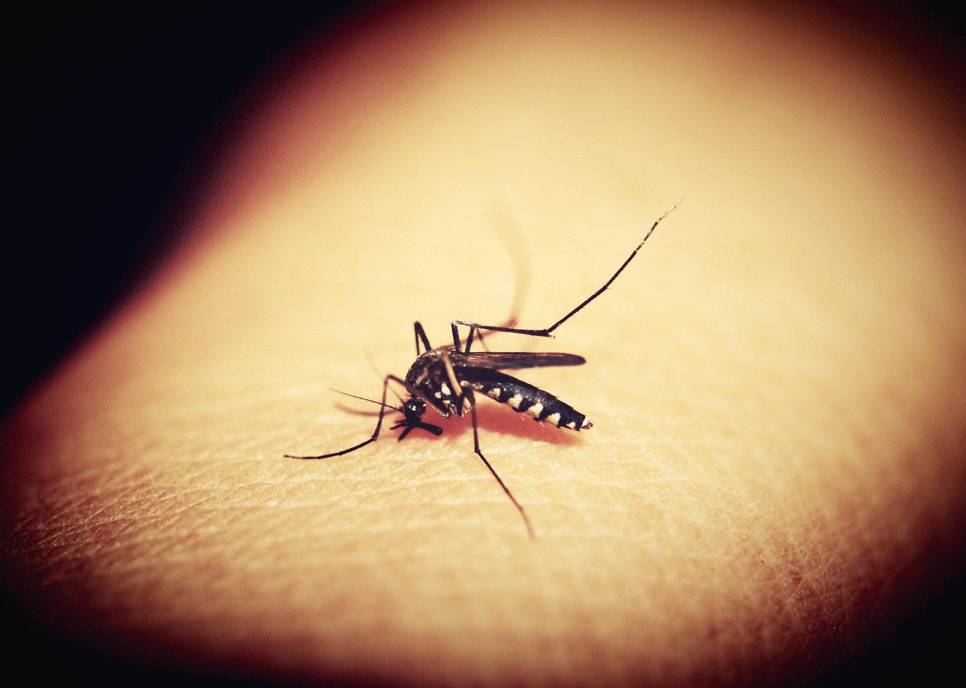 شركة مكافحة حشرات البعوض في المنطقة الغربية أبو ظبي