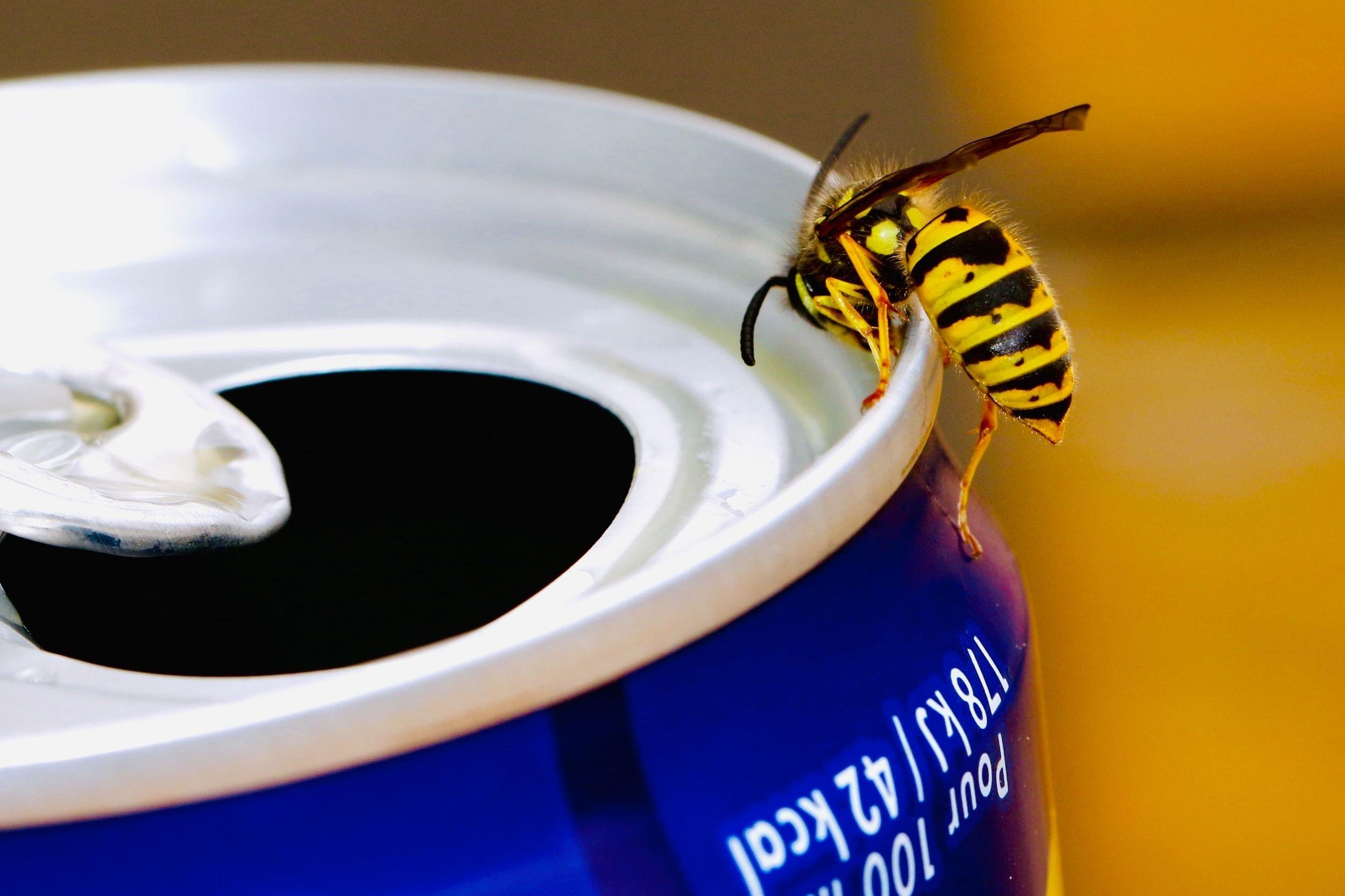 شركة مكافحة حشرات الدبابير