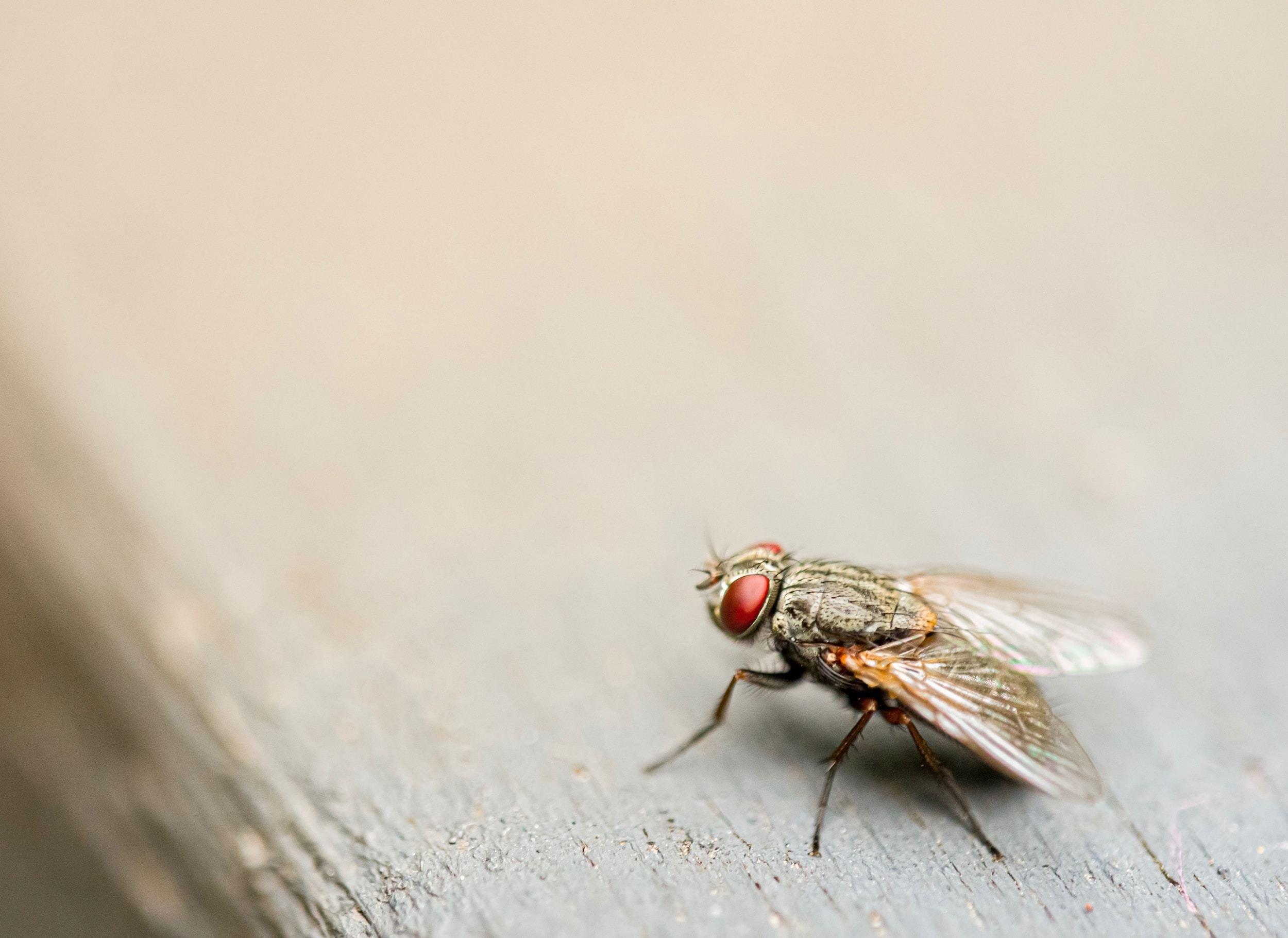 شركة مكافحة حشرات طائرة في أبو ظبي