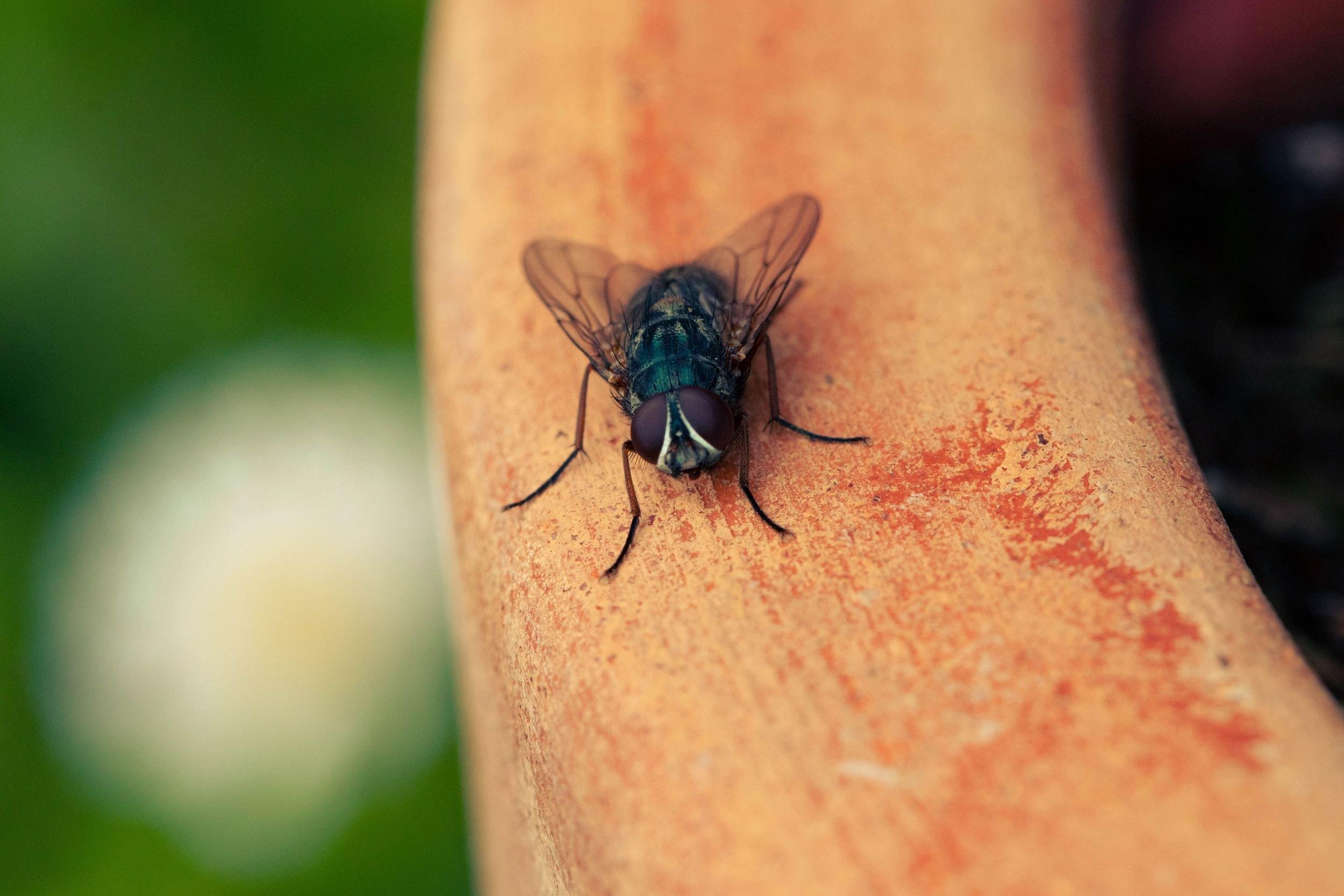 شركة رش مبيدات حشرية لمكافحة حشرات الذباب