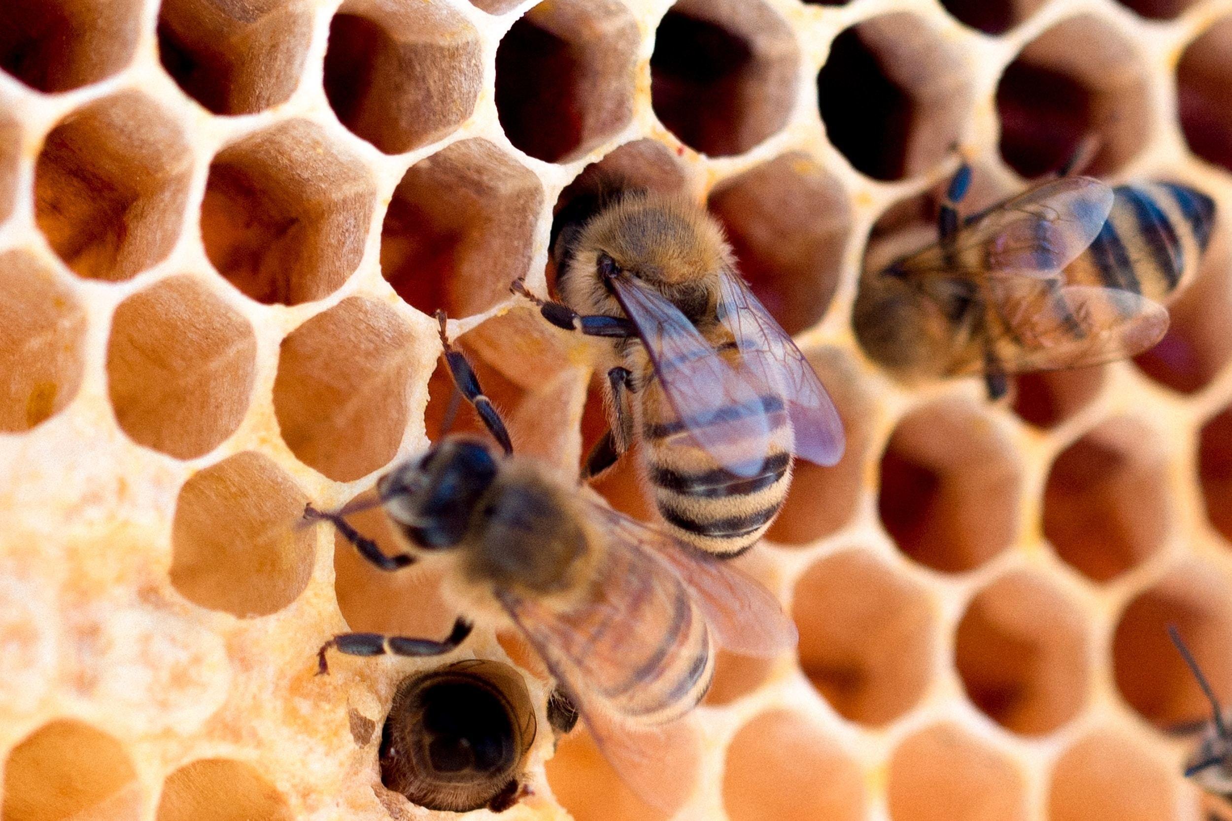 شركة مكافحة حشرات النحل