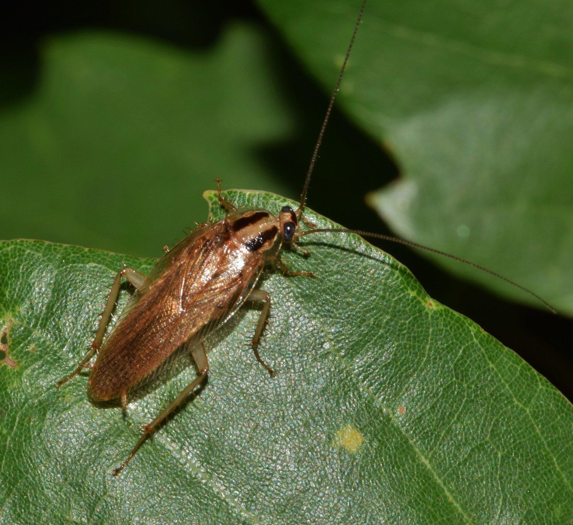 شركة مكافحة حشرات زاحفة في أبو ظبي