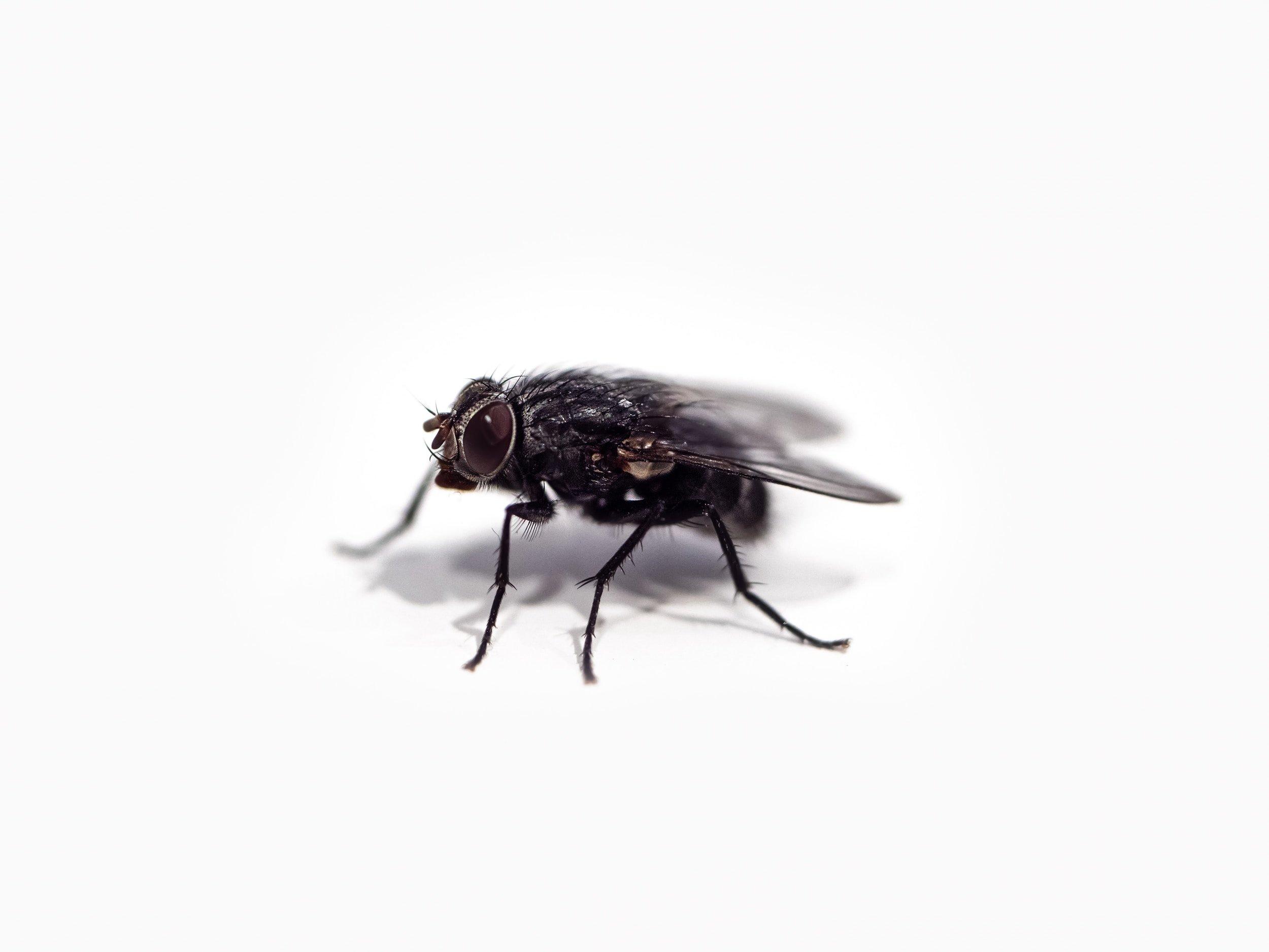 شركة مكافحة حشرات الذباب في الشامخة أبو ظبي