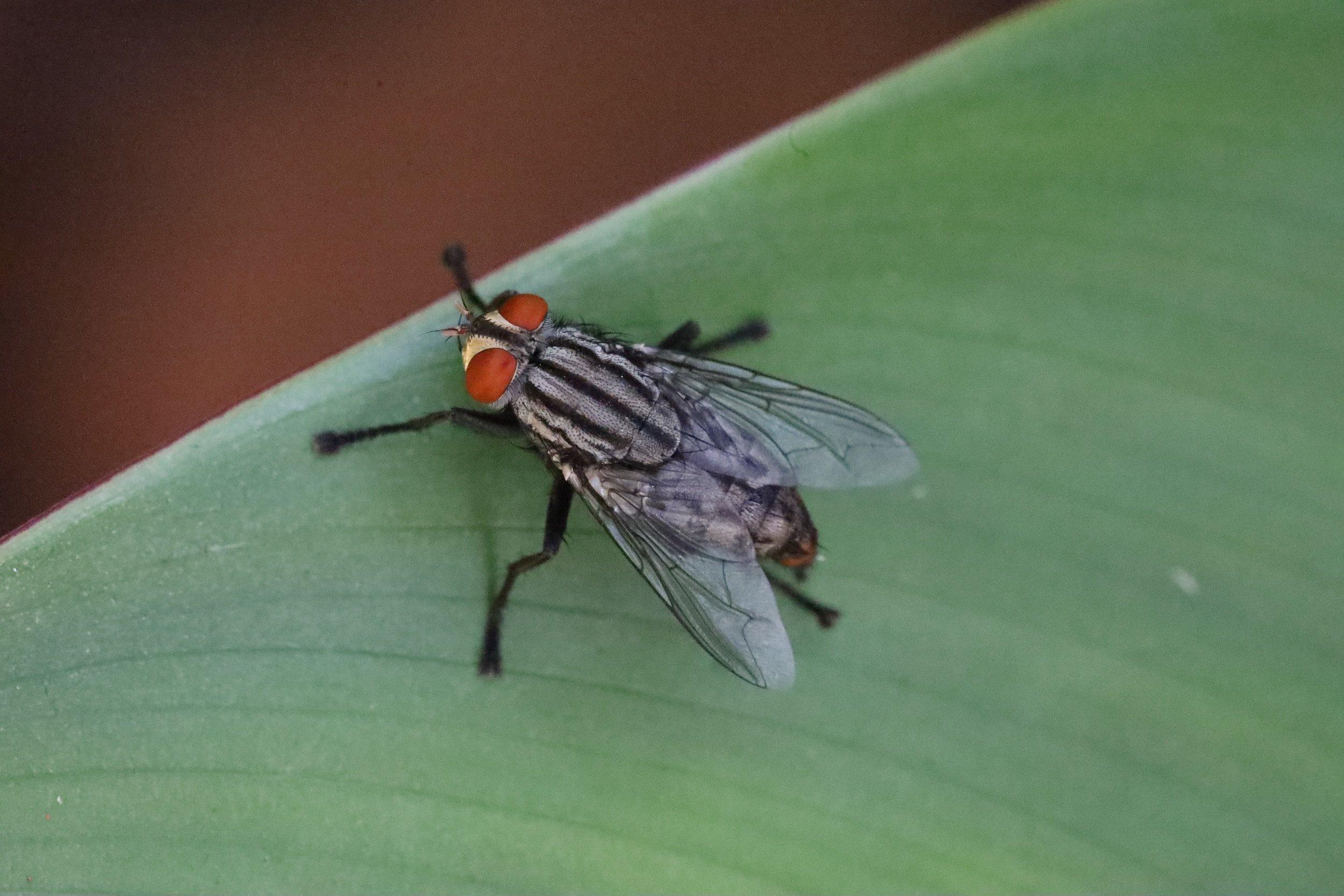 شركة مكافحة حشرات الذباب في الفلاح أبو ظبي