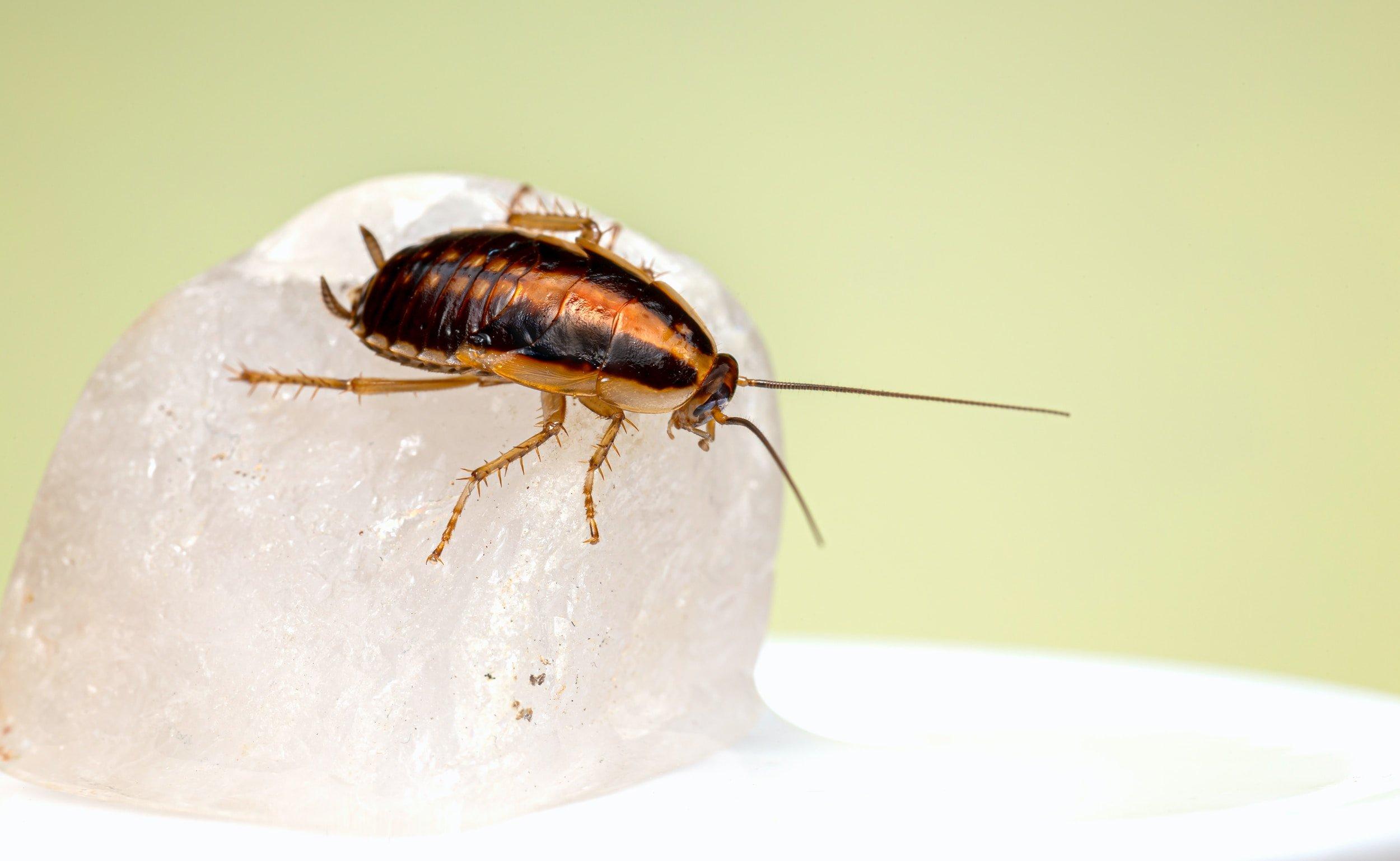 شركة مكافحة حشرات الصراصير في النادي السياحي أبو ظبي