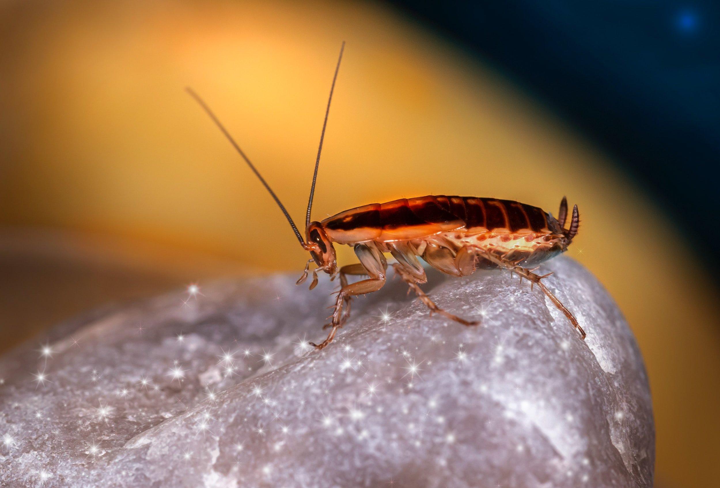 شركة مكافحة حشرات الصراصير في شخبوط أبو ظبي