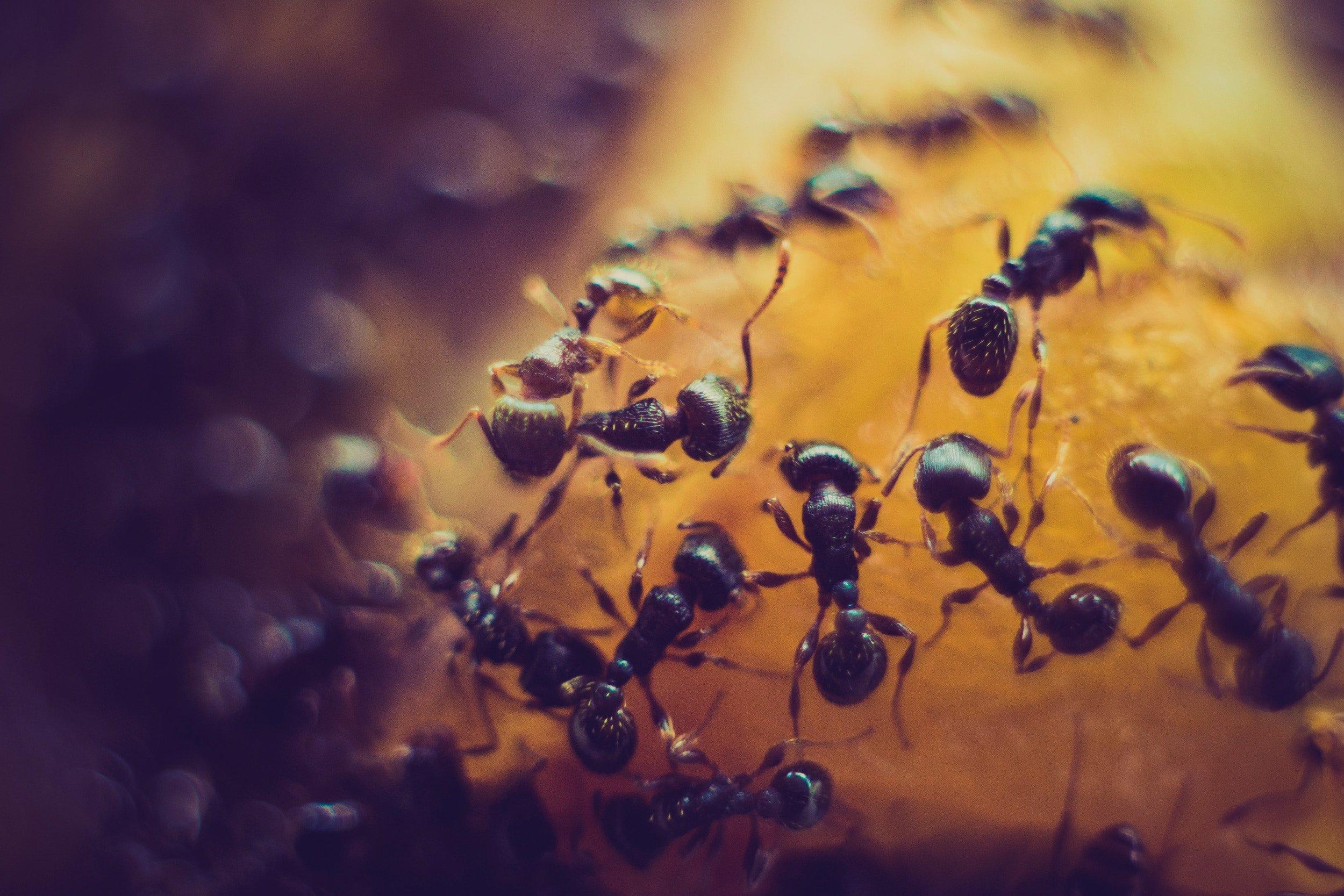 شركة مكافحة حشرات النمل أبو ظبي