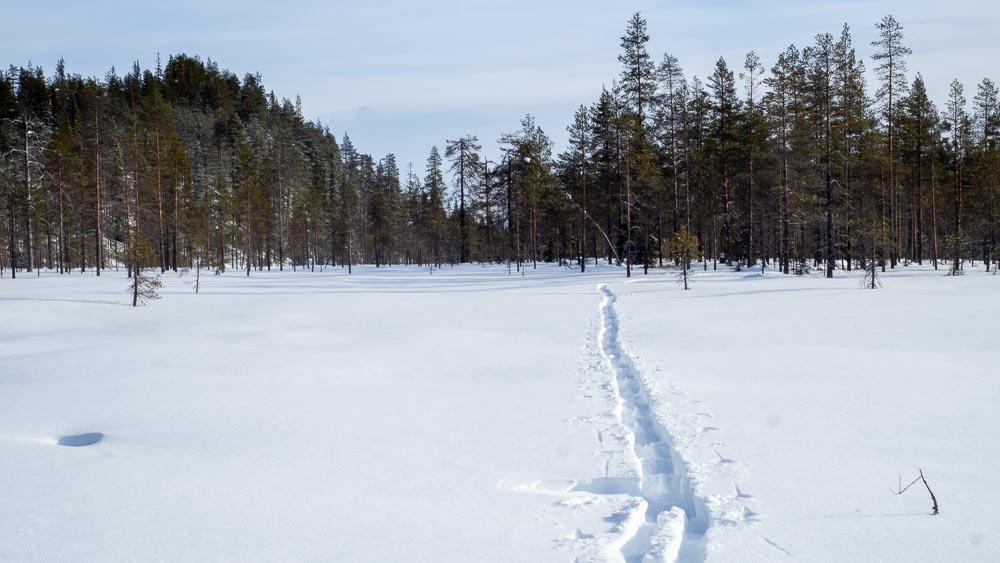 Yksinäisen hiihtäjän umpihankeen jättämä latu erämaassa.