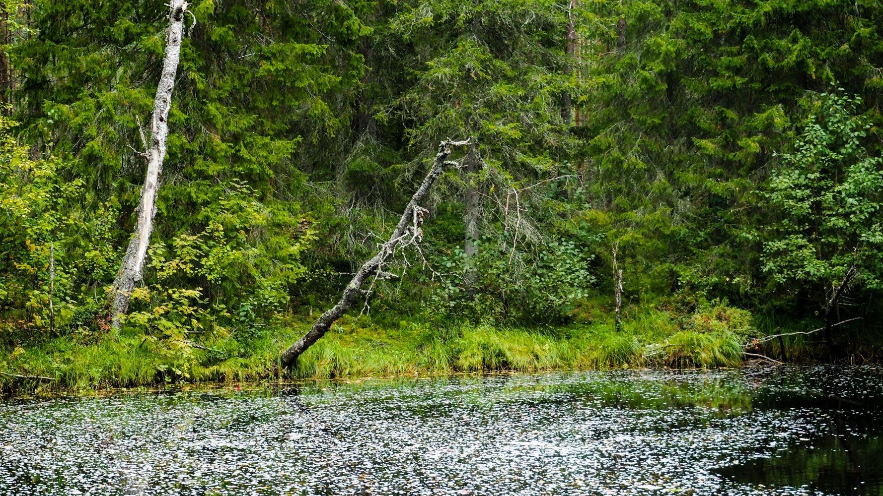 Tummavetisen joen mutka, veden pinnalla kelluu valkoista vaahtoa. Rannalla kurottuu kuollut puu veden ylle.