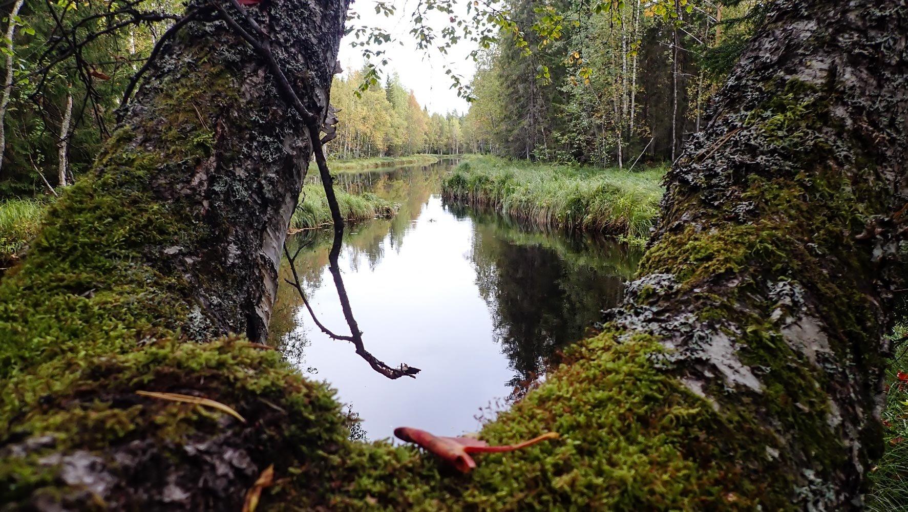 Kuvassa etualalla koivun oksanhaara ja sen takana välkyy joen pinta.