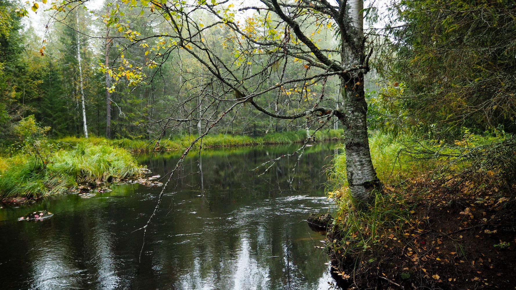 Rauhallinen joki, rannat kasvavat heinää. Kuvan oikeassa laidassa kurottelee koivu oksiaan veden ylle.
