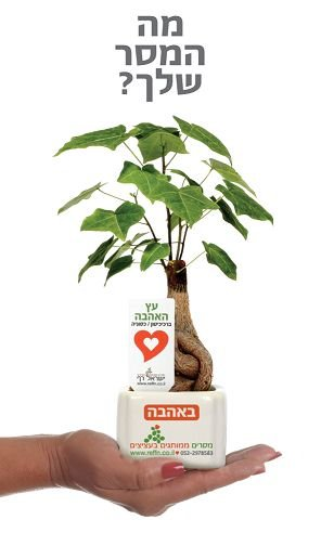 מתנות ממותגות לראש השנה, עציצים ממותגים