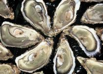 Huîtres Vendée