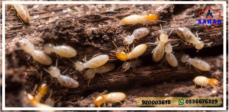 شركة مكافحة النمل الابيض بجدة سهر العالمية 920003618