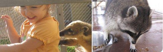 טיפול בעזרת בעלי חיים