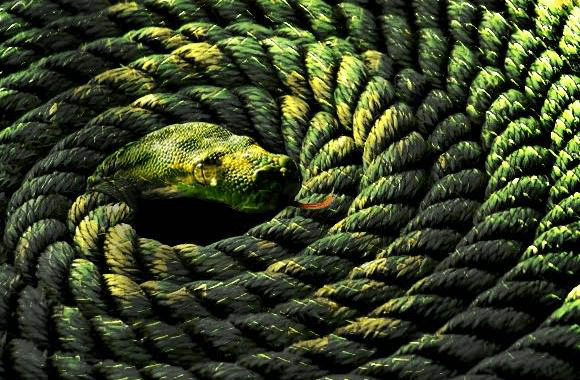 Image result for rope snake visual illusion