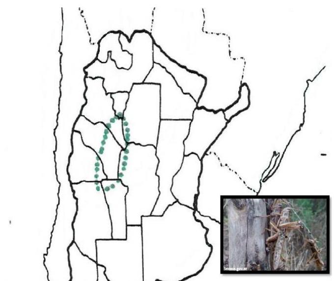 Mapa Argentina Plaga Langosta