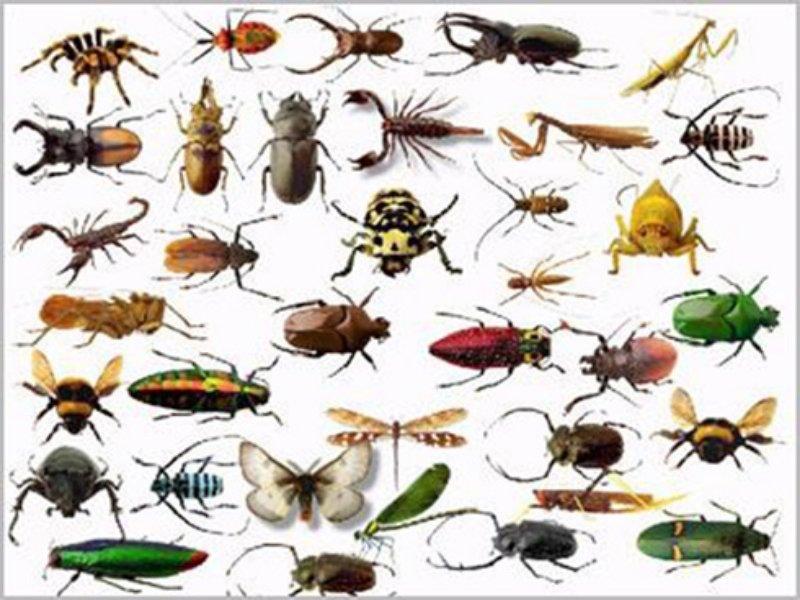 طرق التخلص من حشرات المنزل بسهولة