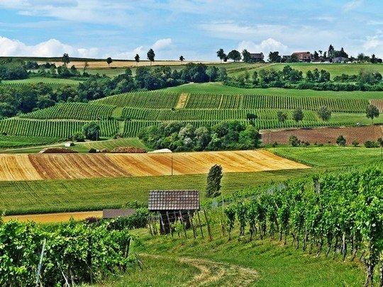 Des vignes de Schaffhouse
