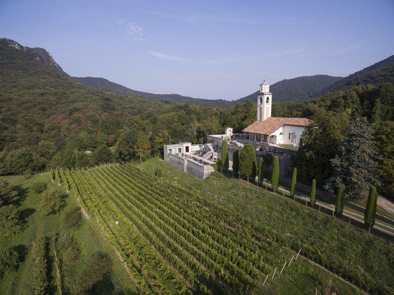 Les vigne de la cave Fawino