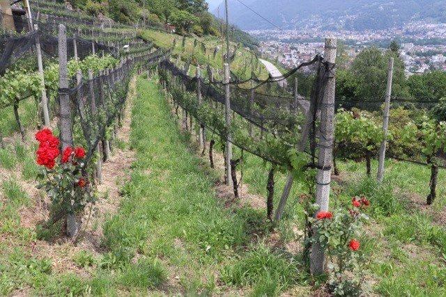 Le Domaine de l'Azienda Mondo à Sementina dans le vignoble tessinois