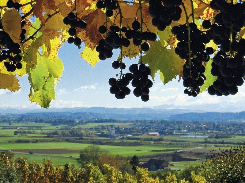 Le domaine viticole de Martin Wolfer, à Weinfelden en Thurgovie.