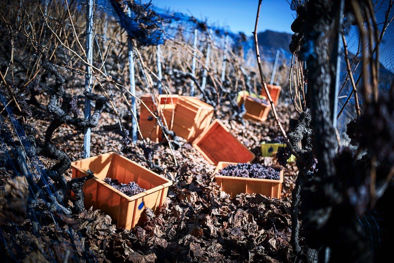 Les vignes de Thierry Constantin entre Vétroz et Sion, en plein coeur du vignoble valaisan.