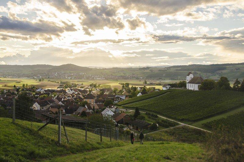 Les vignes de la coopérative Rötiberg Kellerei à Wichlingen dans le vignoble de Schaffhouse