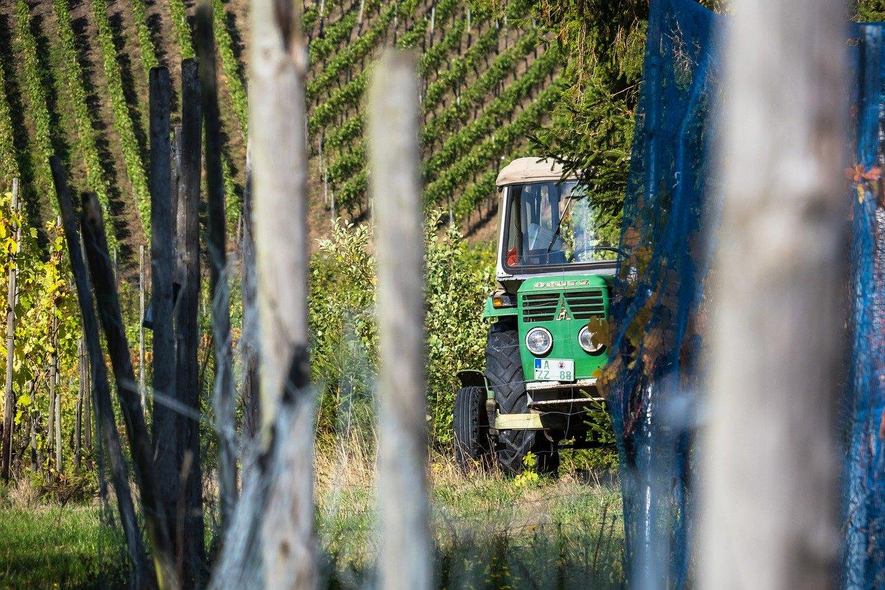 vendange tracteur vigne