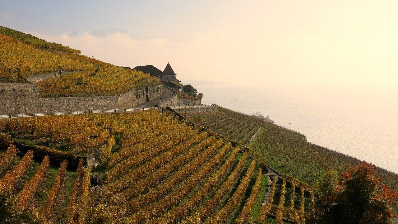 Vignes en Lavaux