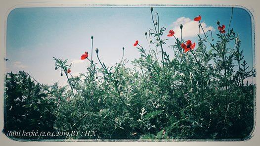 ربما تحتوي الصورة على: نبات، وزهرة، وسماء، وشجرة، ونشاطات في أماكن مفتوحة وطبيعة