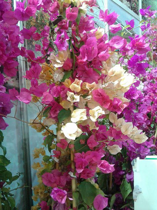 ربما تحتوي الصورة على: زهرة، ونبات، ونشاطات في أماكن مفتوحة وطبيعة