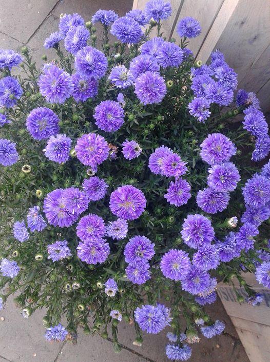 ربما تحتوي الصورة على: نبات وزهرة