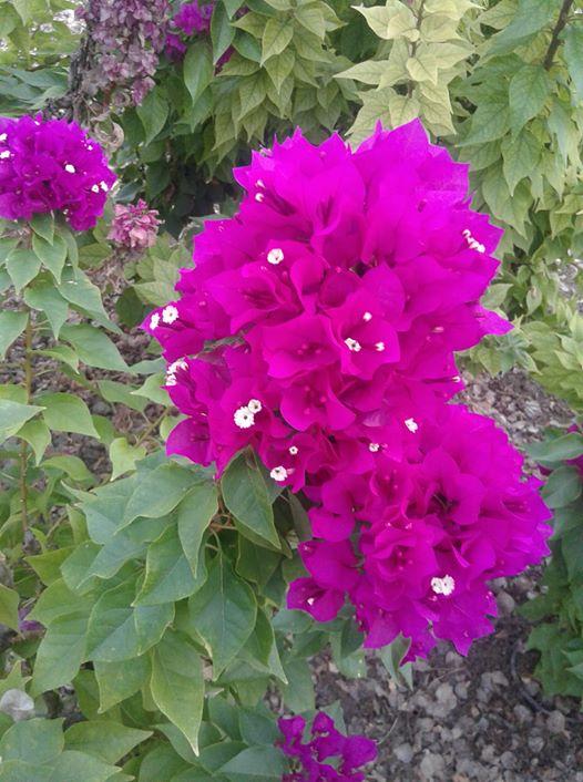 ربما تحتوي الصورة على: نبات، وزهرة، ونشاطات في أماكن مفتوحة وطبيعة