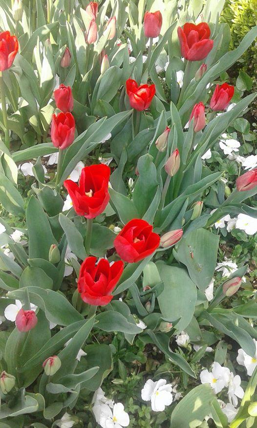 ربما تحتوي الصورة على: نبات، وزهرة، وطبيعة ونشاطات في أماكن مفتوحة