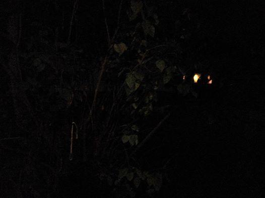 ربما تحتوي الصورة على: ليل، وشجرة ونشاطات في أماكن مفتوحة