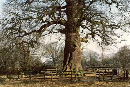 ربما تحتوي الصورة على: شجرة، وسماء، ونبات، ونشاطات في أماكن مفتوحة وطبيعة