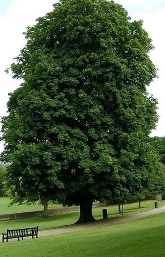 ربما تحتوي الصورة على: شجرة، ونبات، وسماء، ونشاطات في أماكن مفتوحة وطبيعة