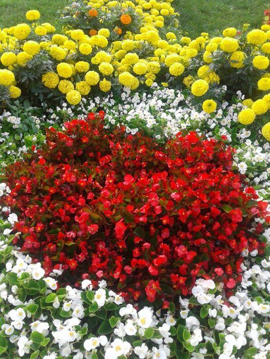 ربما تحتوي الصورة على: زهرة، ونبات، وسماء، وشجرة، ونشاطات في أماكن مفتوحة وطبيعة