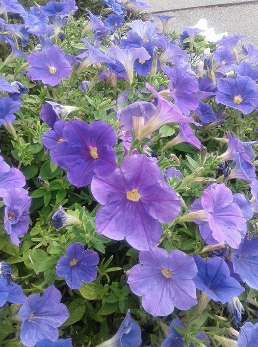 ربما تحتوي الصورة على: نبات، وزهرة، وسماء، ونشاطات في أماكن مفتوحة وطبيعة