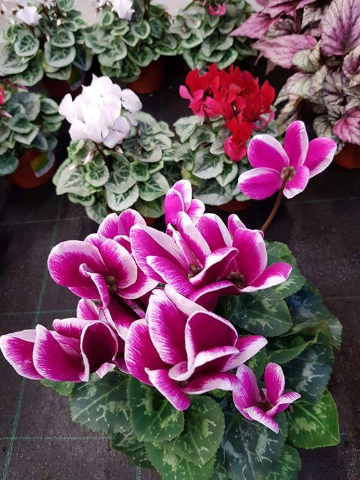 ربما تحتوي الصورة على: نبات، وزهرة وطبيعة