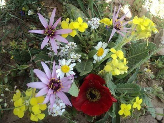 ربما تحتوي الصورة على: زهرة، ونبات، وطبيعة ونشاطات في أماكن مفتوحة