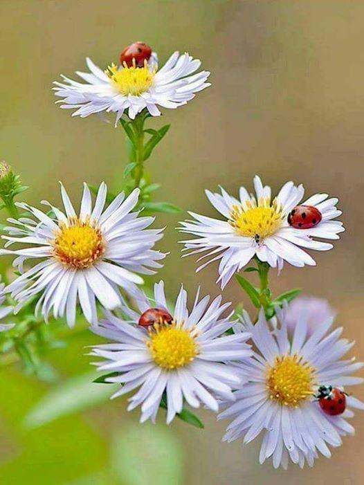 ربما تحتوي الصورة على: زهرة، ونبات وطبيعة