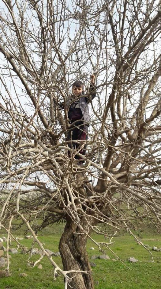 ربما تحتوي الصورة على: شخص أو أكثر، وشجرة، ونشاطات في أماكن مفتوحة وطبيعة