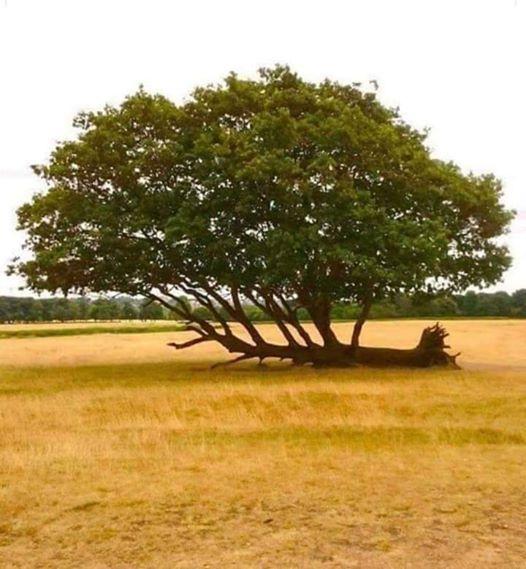 ربما تحتوي الصورة على: شجرة، وسماء، ونشاطات في أماكن مفتوحة وطبيعة