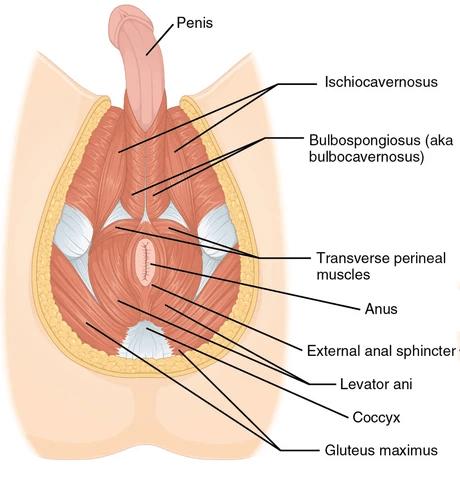 prostate location for massage