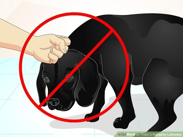 Image titled Train a Naughty Labrador Step 8