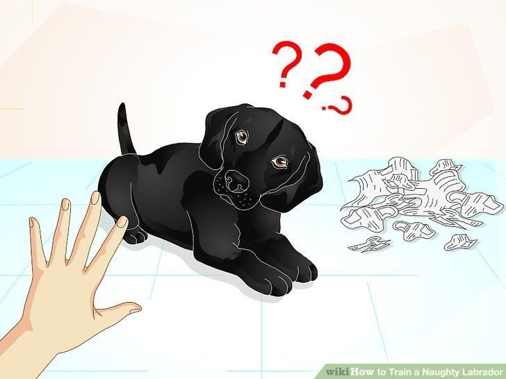 Image titled Train a Naughty Labrador Step 6