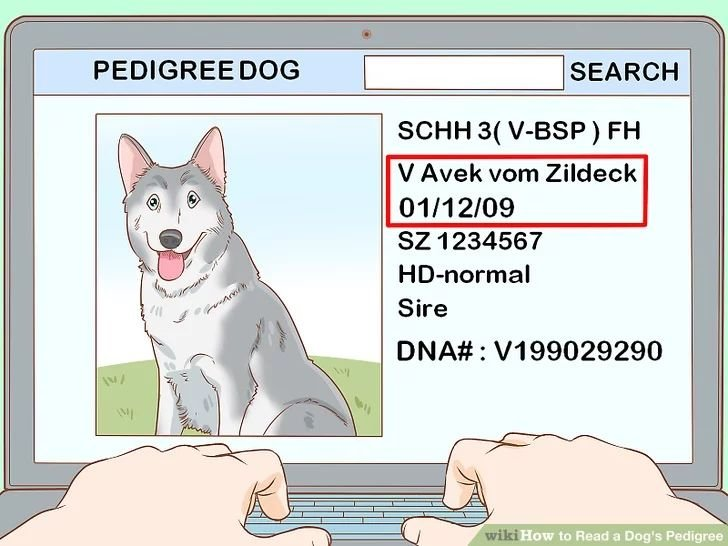 Image titled Read a Dog's Pedigree Step 1
