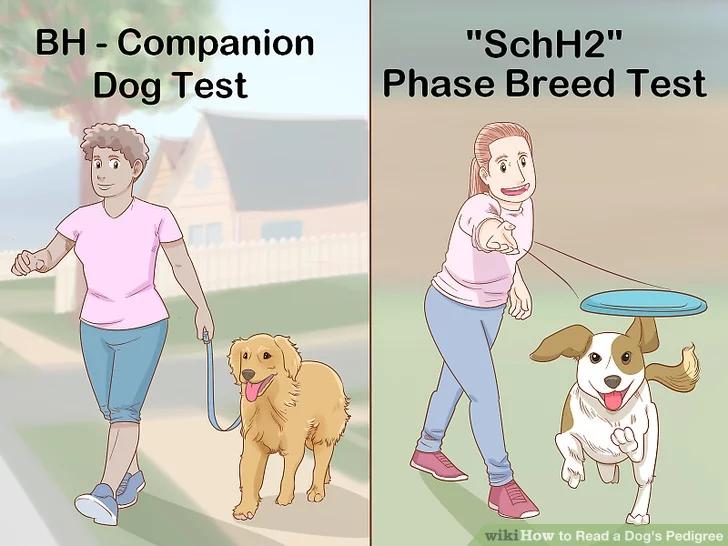 Image titled Read a Dog's Pedigree Step 7